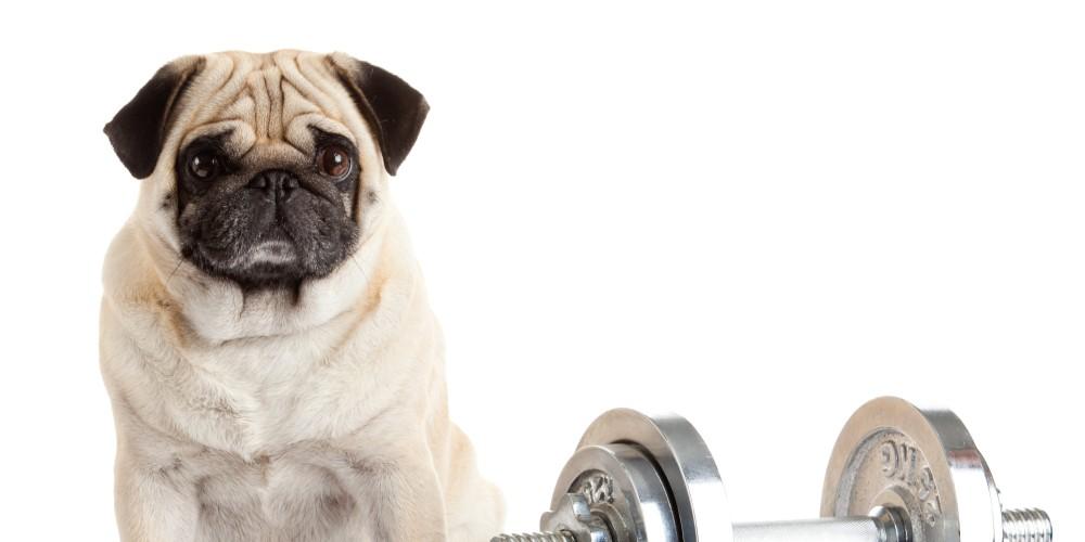 o-FAT-DOG-facebook.jpg